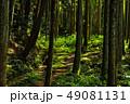 森 森林 道の写真 49081131