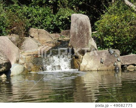 稲毛海浜公園の池に亀の親子 49082775
