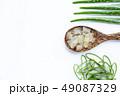 リュウゼツラン 竜舌蘭 アロエの写真 49087329