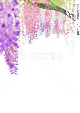 藤の花 49089724