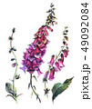 水彩画 植物画 花のイラスト 49092084