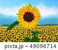 向日葵 49096714