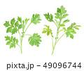 植物 よもぎ 野草のイラスト 49096744