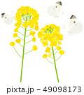 菜の花ともんしろちょう2 49098173