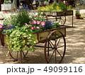 初夏に咲く花々でいっぱいの花車 49099116