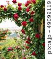 薔薇に覆われたアーチ 49099119