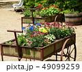 初夏に咲く花々でいっぱいの花車 49099259