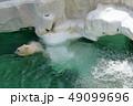 上野動物園 動物 熊の写真 49099696