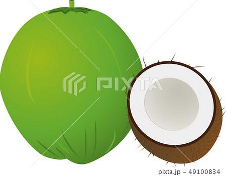 ココナッツ 49100834