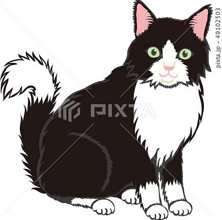長毛白黒猫のイラスト素材