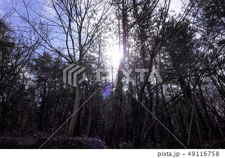太陽の光が眩しい公園の木々、森 49116758