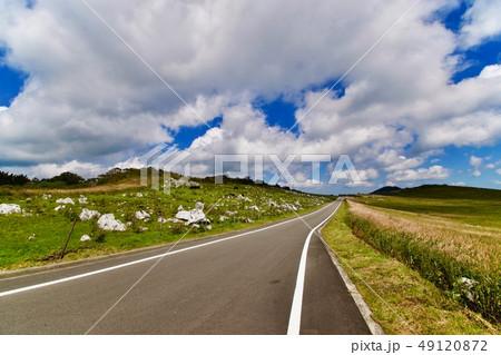 山の上の牧場 49120872