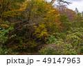 白神山地 津軽国定公園 十二湖171 49147963