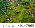 白神山地 津軽国定公園 十二湖173 49147965