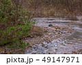 白神山地 津軽国定公園 十二湖178 49147971