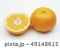 柑橘類 オレンジ色 伊予柑の写真 49148615