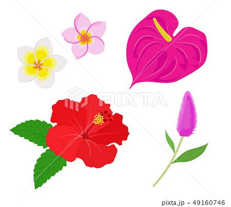 南国の花 イラストセットのイラスト素材