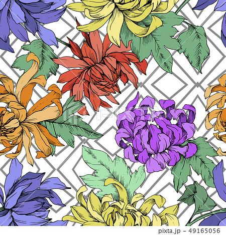 Vector Chrysanthemum floral botanical flowers. Engraved ink art. Seamless background pattern. 49165056