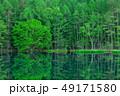 御射鹿池 新緑 森林の写真 49171580