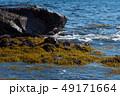 ひじき 海 海藻の写真 49171664