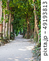 備瀬 備瀬のフクギ並木 フクギ並木の写真 49193813
