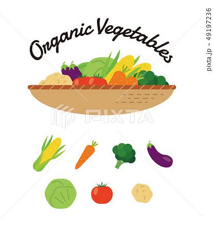 有機野菜 オーガニック イラスト ベクター 49197236