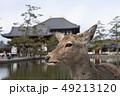 鹿 東大寺 中門の写真 49213120