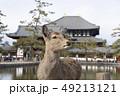 鹿 東大寺 中門の写真 49213121