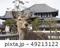 鹿 東大寺 中門の写真 49213122