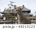 鹿 東大寺 中門の写真 49213123
