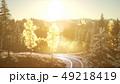 Forest under Sunrise Sunbeams 49218419