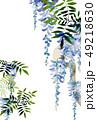 藤 鳥 花のイラスト 49218630