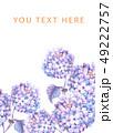 透明水彩 水彩画 紫陽花のイラスト 49222757