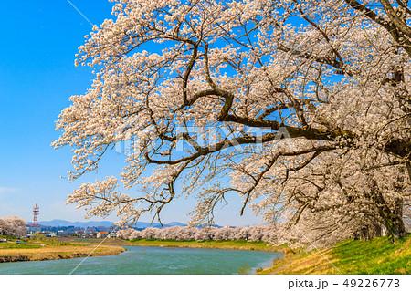 一目千本桜 大河原 49226773