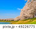 桜 一目千本桜 春の写真 49226775