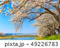 桜 一目千本桜 春の写真 49226783