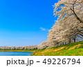 桜 一目千本桜 春の写真 49226794