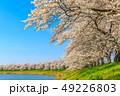 桜 一目千本桜 春の写真 49226803
