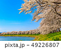 桜 一目千本桜 春の写真 49226807