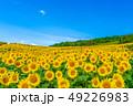 夏の三ノ倉高原 ひまわり 49226983