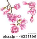 花 水彩画 桃色のイラスト 49228396