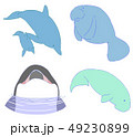 イルカほか4種 49230899