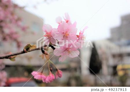 美しい桜の花、日本の春 49237913