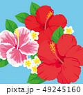 ハイビスカス 花 トロピカルのイラスト 49245160