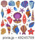 貝殻 トスターダ シーシェルのイラスト 49245709