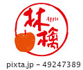 林檎 筆文字 appleのイラスト 49247389