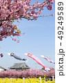 河津桜 桜 春の写真 49249589