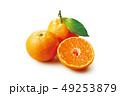 温州みかん 果物 断面の写真 49253879