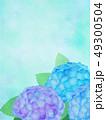 紫陽花 あじさい 植物のイラスト 49300504