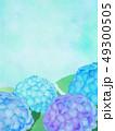 紫陽花 あじさい 植物のイラスト 49300505